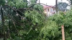 Phú Thọ: Kiểm điểm nhiều địa phương báo cáo thiệt hại dông bão không sát