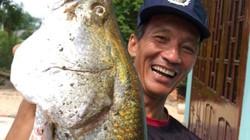 Cần thủ quần thảo dưới nước bắn được cá nặng 12kg