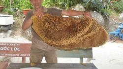"""""""Loạn"""" chợ mật ong ở An Giang: Có loại giá lên tới 1,7 triệu đồng/lít"""