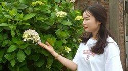 Du khách thích thú check- in cùng hoa cẩm tú cầu trên đỉnh Mẫu Sơn