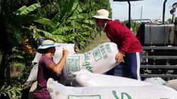 Bạc Liêu: Giá lúa đang tăng mạnh, nhà nông phấn khởi vì lãi khá
