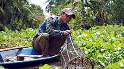 Bắt quá mức, dùng thuốc sâu, thủ phủ cá đồng Cà Mau hiếm dần