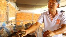 Mắc mùng nuôi loài ruồi chết sớm, bán trứng giá 15 triệu/ký