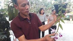 Lạ Thái Nguyên: Vườn lan siêu độc, giá cả chục triệu 1cm