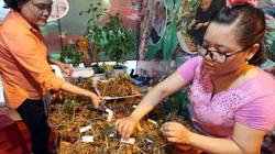 Quảng Nam: 2 gian hàng bán đến 4 tỷ tiền sâm Ngọc Linh
