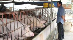 Tin mới về dịch tả lợn châu Phi ở Đồng Nai: Đang được khống chế