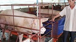 Dịch tả lợn châu Phi ở Đồng Nai: Ban hành 5 mức hỗ trợ thiệt hại