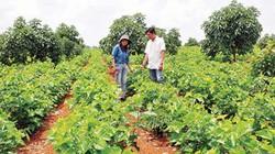 Nông thôn mới Đắk Nông: Đẩy lùi đói nghèo nhờ liên kết sản xuất
