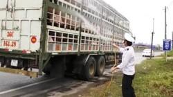 Quảng Trị: Phát hiện một ổ dịch tả lợn Châu phi tại TP. Đông Hà