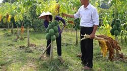 Hà Nội: Huyện nghèo Sóc Sơn xoay sở nâng cấp trường học, thủy lợi