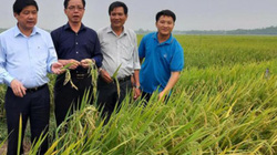 ThaiBinh Seed miền Trung-Tây Nguyên: Tiên phong đưa giống mới vào sản xuất