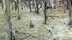 Video: Chú chó kịch chiến với sư tử cái trong rừng và kết cục khó tin