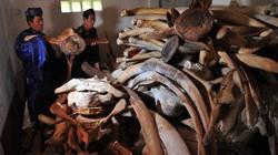 Phục dựng bộ xương cá Voi lớn nhất Việt Nam trên đảo Lý Sơn