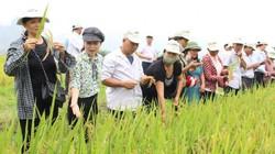 """Nông dân xứ Thanh """"mê"""" nhiều giống lúa chất lượng cao của Vinaseed"""