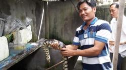 """""""Công tử"""" Bạc Liêu nuôi lúc nhúc loài rắn bự trong bể xi măng"""