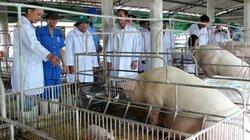 Hé lộ nguyên nhân gây dịch tả lợn châu Phi ở Đồng Nai