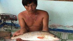 Khánh Hòa: Đi biển, bất ngờ bắt được cá lạ nghi sủ vàng 3kg cực hiếm
