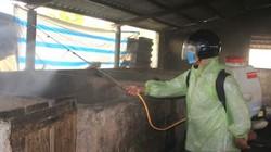 Nhận định nguyên nhân gây dịch tả lợn Châu Phi ở Quảng Trị