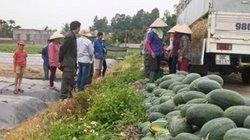 """Trung Quốc """"làm khó"""", xuất khẩu rau quả vẫn lấy lại """"phong độ"""""""