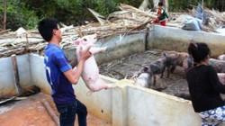 TP.HCM: Bất lực di dời các hộ nuôi heo gây ô nhiễm, xả thải vô tư