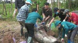 Cần cấp đông hàng triệu tấn thịt để đối phó dịch tả lợn châu Phi