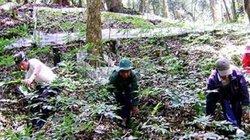 """""""Giấu báu vật"""" trong rừng sâu, vùng đất nghèo giờ có nhiều tỷ phú"""