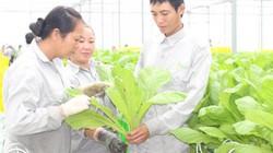 Nông dân Sài thành khó vay vốn phát triển nông nghiệp công nghệ cao