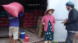 HTX Thạnh Phú nợ nông dân 13 tỷ đồng mua lúa, hàng trăm hộ bấn loạn