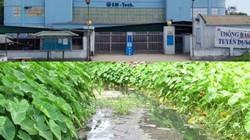 Công ty EM-Tech ở Nghệ An xả thải thẳng ra môi trường