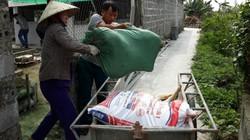 Chuyên gia cảnh báo: Chữa được bệnh dịch tả lợn châu Phi là bịa đặt