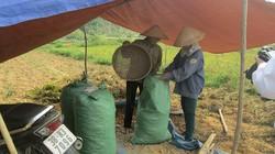Hà Tĩnh: Nắng nóng cực độ, dân lọ mọ làm đồng vào ban đêm