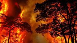Cháy 15ha rừng ở Quảng Bình, Trung đoàn Cơ động phải vào cuộc