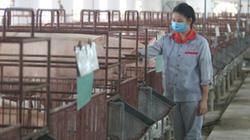 Hà Nội nỗ lực xây dựng vùng chăn nuôi an toàn