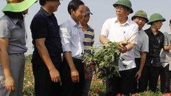 Chủ tịch UBND tỉnh Quảng Trị lội ruộng xem loài sâm Bố Chính