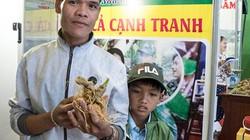 Quảng Nam: Từ làm thuê thành ông chủ vườn sâm hàng chục tỷ