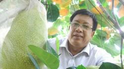 Khắp nơi trồng mít Thái, ngành trồng trọt hối hả đi chấn chỉnh