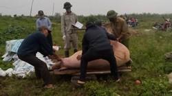 Dịch tả lợn châu Phi tàn phá trang trại lớn: Thiệt hại khủng khiếp
