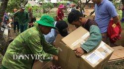 Được cả mùa lẫn giá, người trồng mận Mộc Châu đếm tiền mỏi tay