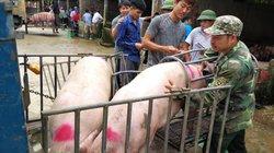 """Bất ngờ: Chợ lợn lớn nhất miền Bắc xôn xao mua bán giữa """"bão"""" dịch"""