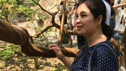 """Chuyện lạ Thanh Hóa: Mục sở thị cây ổi """"phì cười"""" độc nhất xứ Thanh"""