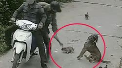 """VIDEO: Cận cảnh """"cẩu tặc"""" dùng súng điện trộm chó trong tích tắc"""