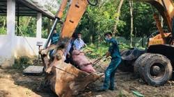 Nhiều tỉnh ĐBSCL hoãn họp để chống dịch tả lợn châu Phi