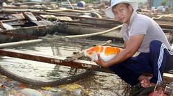 """""""Ngư phủ"""" bảnh trai nuôi hàng tấn cá """"quý tộc"""" ở sông Đồng Nai"""