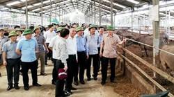 Ở trại trâu bò thịt lớn nhất miền Bắc, thu hoạch phân đã có nửa tỷ