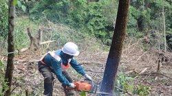 Khai thác rừng theo tiêu chuẩn FSC có gì đặc biệt?