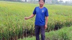 Truy tìm kẻ xấu cắm nhiều thanh sắt xuống ruộng để phá máy gặt lúa