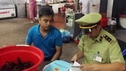 Bất chấp lệnh cấm, 2 quán ăn ở Quảng Ninh vẫn bán tôm càng đỏ