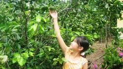 Nông Sơn đẹp lên với những vườn cây ăn trái như miền Tây