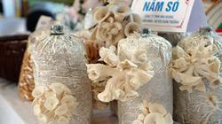 Phụ nữ thành Nam khởi nghiệp làm giàu với nấm sò, rau sạch