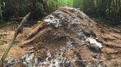 Chôn heo chết gần khu dân cư, người dân Cần Thơ phản ứng